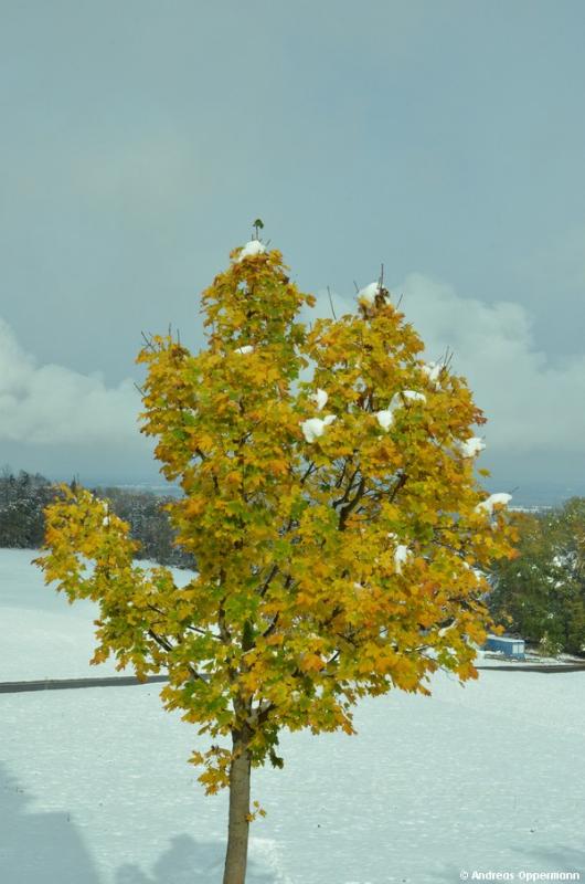 Buntes Herbstlaub mit weißem Schnee