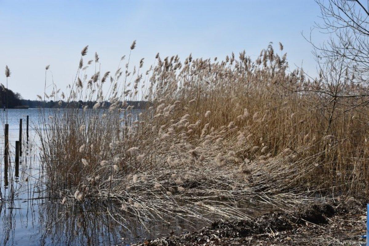 Winterlicher März am Krossinsee