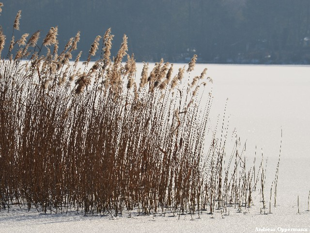 Winter am Krossinsee