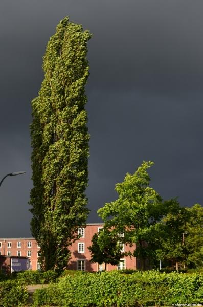 Wolken und Wind am Hertha-Gelände