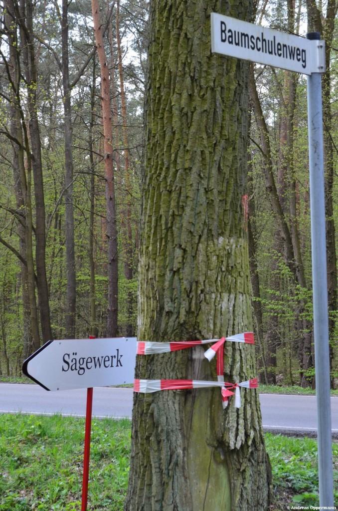 Der Weg des Holzes