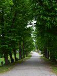 Auf dem Radweg von Forst nach Klein Bademeusel