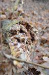 Schnittstellen im Wald auf Schmöckwitz Werder