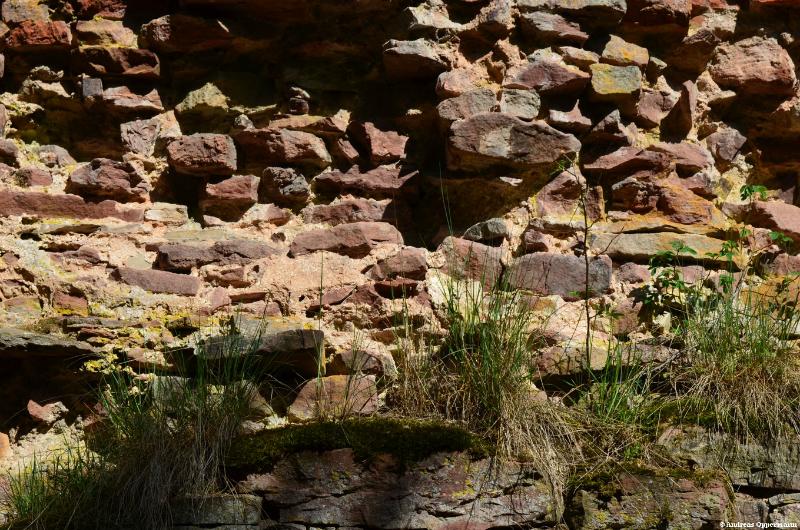 Ruine Aura