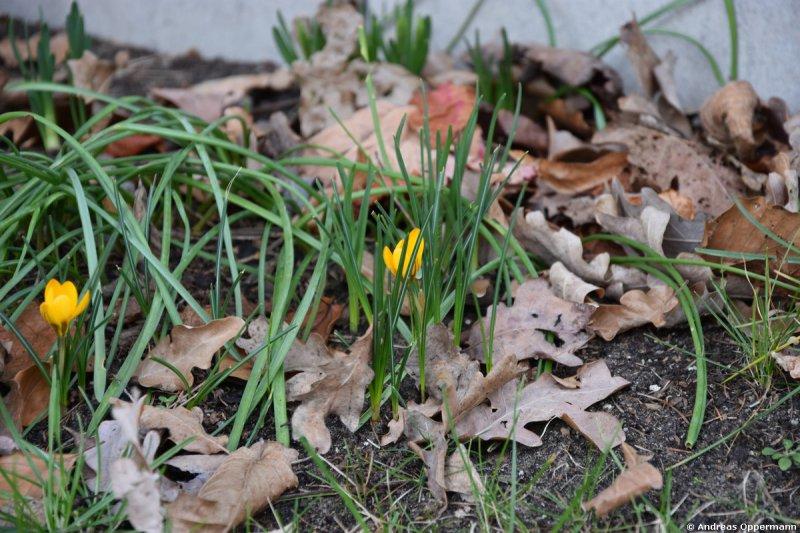 Erste Blumen