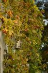 Wein in Eichwalde